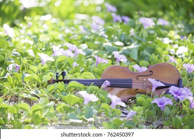 The violin lies on the ground, the concept: a song about summer, music in colors, a flower garden, toned