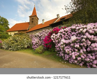 Violin and red blossoms of a rhododendron in a botany garden, chateau of Pruhonice, Bohemia
