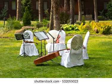 Violins. Cello.Violin outdoors. Live music. Wedding.Musician for the wedding.Violin under the open sky
