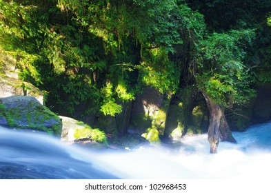 Virgin forest and driftwood
