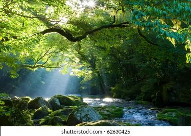 Virgin forest and shaft beam of light
