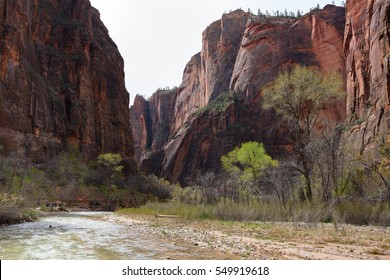 The Virgin River, flowing though Zion Canyon in early Spring, showing fresh leaves on the trees and the dramatic rock faces.