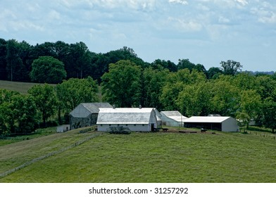 Virginia cattle farm with stone barn and cows heading to pasture