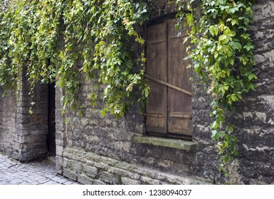 Virginia Creeper branches hanging on old limestone wall. Window closed by shutter. Photographed in Tallinn old town, Estonia.