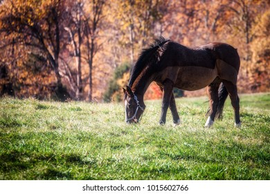 A Virginia morning with a horse grazing in a near a forest.