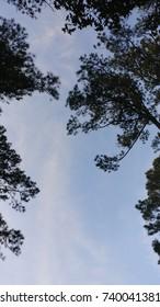 Virginian Blue Sky