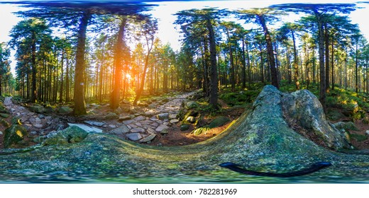 Virtual Reality walk in tranquil forest hiking trail in mountains near creek