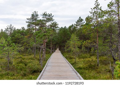 Viru bog (Viru raba) in the Lahemaa National Park in Estonia. Viru bog study trail