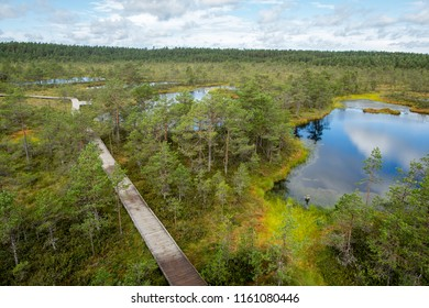 Viru raba bogs walking track, Estonia