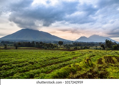 Virunga volcano national park landscape with green farmland fields in the foreground, Rwanda