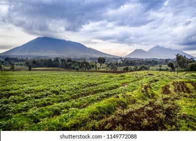 Virunga volcano national park landscape with green farmland fields in the foreground, Rwanda