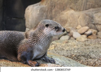 Visit to the Biodome of Montreal - River Otter