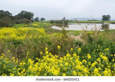 Visit to Ein Afek nature reserve, Israel