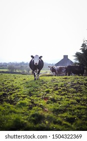 A visit to a farmyard in the West of Ireland