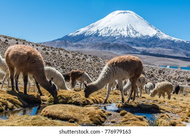 Visit to the Lake Chungara in the Lauca National Park, far north of Chile. Sitting at 4500m above sea level, the landscapes consist of many volcanoes, including Parinacota.