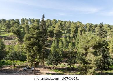 Visiting Lahav Forest in northern Negev, Israel