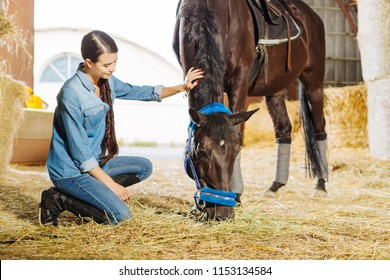 Visiting stable. Dark-haired appealing horsewoman with long braid visiting stable and big dark horse