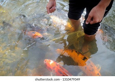 Visitor feeding fishes at Kg.Luanti tagal river,Sabah,Malaysia. Tagal means 'no fishing' in local kadazan-dusun dialect