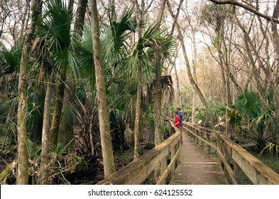 Visitors to the park on a wooden walkway above the swampy terrain. Highlands Hammock, Florida State Parks, USA