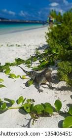 Visitors in this beautiful deserted Island, Klein Bonaire - Bonaire