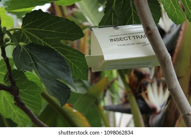 Vista, CA / USA - May 24, 2018: An insect trap has been placed in a fruit tree in Southern California by the Agricultural Department to control pests naturally