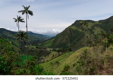Vista in the Cocora Valley in Colombia