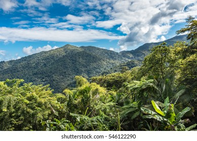 Vista of the El Yunque rainforest with tropical vegetation and mountains captured on the drive through the forest