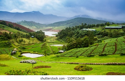 Vistas of green forests, mountain ranges covered in fog, blue skies and plantation, pond and lake at a resort in ooty