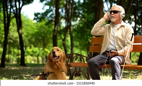 Visually impaired man in earphones listening music in park, guide dog resting by