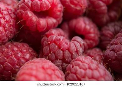 Vitamins. Summer berries. Raspberries background. Close up, selective focus Harvest Concept