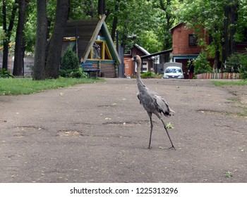 VITEBSK, BELARUS - JULY 8, 2016: Crane in the Vitebsk zoo
