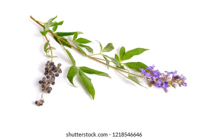 Vitex agnus-castus, also called vitex, chaste tree or chastetree, chasteberry, Abraham's balm, lilac chastetree or monk's pepper isolated