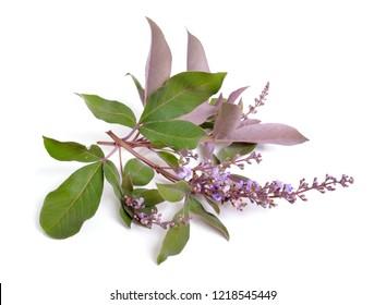 Vitex trifolia var purpurea. Isolated on white background.