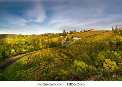 Viticulture in Styria Bad Radkersburg, wine country