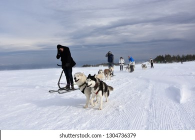 Vitosha, Bulgaria - February 03, 2019: Group of friends gather together with their Husky dogs on Vitosha Mountain plateau for a mushing race. Cold windy winter day high in the mountain.