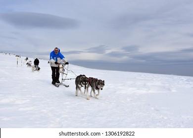 Vitosha, Bulgaria - February 03, 2019: Man with two Husky sled dogs during mushing race high in Vitosha Mountain