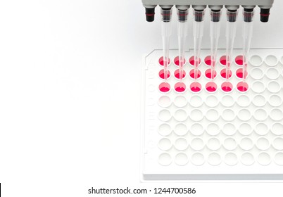 In vitro cellular assay using multi pipette and 96 well white plate