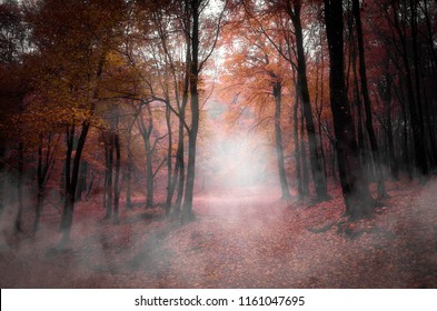 vivid autumn forest landscape with fog on forest path and colorful foliage