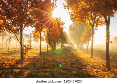 Vivid autumn nature with bright sunrays. Sunlight in colorful autumn morning. Yellow trees on october meadow on sunny clear morning. Fall. Nature in sunrise. Sunshine through trees