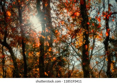 Vivid autumn-colored tree background with sunflare