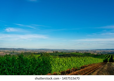 A vivid blue sky with swashes of clouds covers this view down a lush row of grapevines highlighted by afternoon sun in an Oregon vineyard.