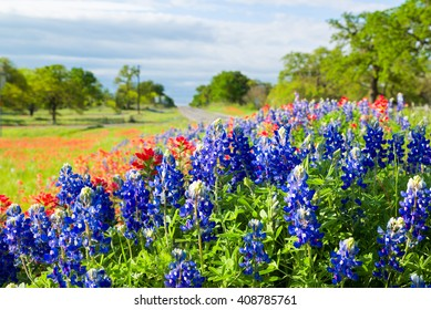 Vivid bluebonnets and Indian paintbrush wildflowers bathed in morning light