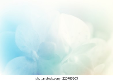 vivid color hydrangea in blur style for background