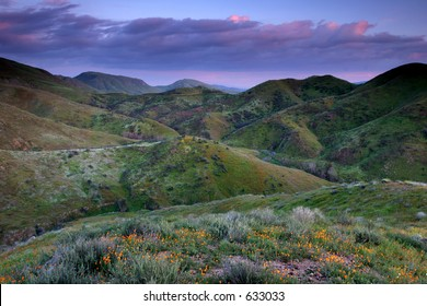 Vivid colors of the hills illuminated by the sunset with spring flowers
