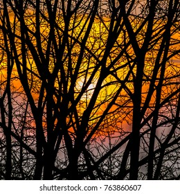 The vivid colors of the sunset seen through the bare branches of the trees