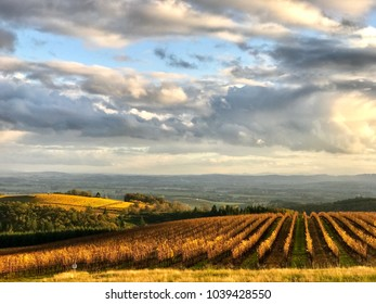 Vivid gold rows of vines in the foreground, a bright gold swell of vineyard in the background, and gray clouds against blue sky above in this scene from an Oregon vineyard.