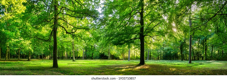 Vivid green forest panorama in spring