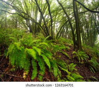 Vivid green lush forest, covered in moss and ferns