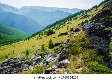 Vivid green mountainside with conifer forest and crags. Coniferous trees and rocks on big hillside. Scenic alpine landscape. Big stones on steep slope with rich vegetations. Green highland scenery.