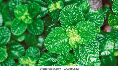 Vivid Green Plant